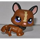 Corgi 1767 (Brown, Purple Eyes) - Littlest Pet Shop (Retired) Collector Toy - LPS Collectible