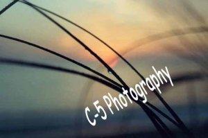 Dune Grass (Beach 004) - 8 x 10 Matted Photograph