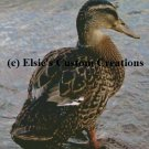 Single Duck 2 - PDF Cross Stitch Pattern