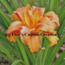 Tiger Lilly 1 - PDF Cross Stitch Pattern