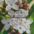 Elsie's Lilacs 5 - PDF Cross Stitch Pattern