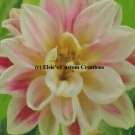 Miniature Dahlia - PDF Cross Stitch Pattern