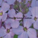 Purple Floral - PDF Cross Stitch Pattern