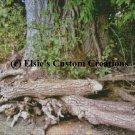 Woods 3 - PDF Cross Stitch Pattern