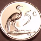 Rare Proof South Africa 1980 5 Cents~Only 5,000 Ever Minted~Blue Crane~Free Ship
