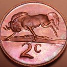 Rare Proof South Africa 1976 2 Cents~Only 7,000 Ever Minted~Black wildebeest~F/S