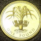 Gem Cameo Proof Great Britain 1985 Pound~102,000 Minted~Welsh Leek~Free Shipping