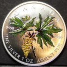 Canada 5 Dollars, 2005, RARE SILVER UNC~Big Leaf Maple~21,233 Minted~Colorized
