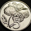 Cook Islands 5 Cents, 1975 Gem Unc~RARE~2,251 Minted~Hibiscus~Free Shipping
