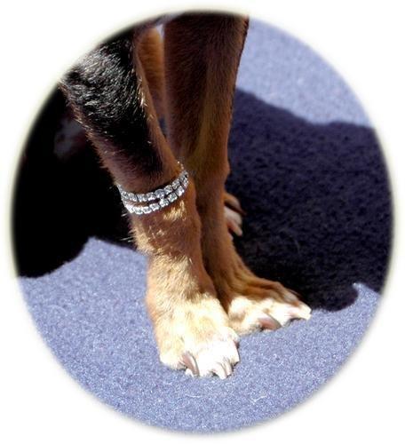 Bling Pooch Bracelet