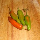 PEPPERONCINI Pepper ( Capsicum baccatum ) - 15 seeds  ~gemsandstems.info~