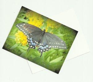 Black Swallowtail BUTTERFLY Postcards ( set of 10 )  ~gemsandstems.info~