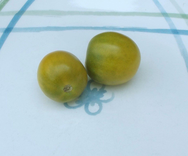 Artisan GREEN GRAPE Tomato ( Solanum lycopersicum ) - 15 seeds  ~gemsandstems.info~