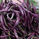 Heirloom BLAUHILDE Pole Bean ( Phaseolus ) - 10 seeds  ~gemsandstems.info~