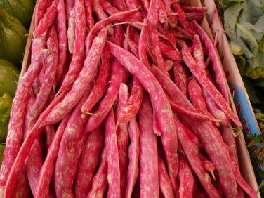 Heirloom BORLOTTO LINGUA Pole Bean ( Phaseolus ) - 10 seeds  ~gemsandstems.info~