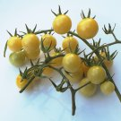 Heirloom BIANCA Tomato ( Solanum ) - 15 seeds  ~gemsandstems.info~