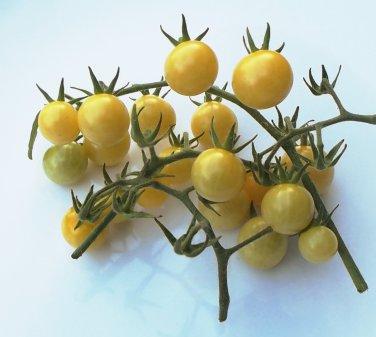 Heirloom BIANCA Tomato ( Solanum ) - 15 seeds  ~gemsandstems.info~