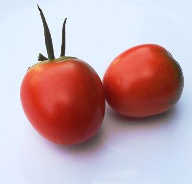 Artisan QUADRO Tomato ( Solanum  ) - 15 seeds  ~gemsandstems.info~
