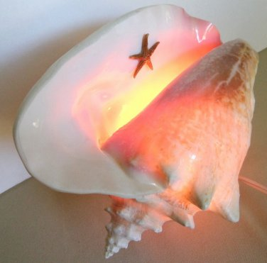 Natural Conch Sea Shell Electric Light Lamp Table Top Shelf Handmade