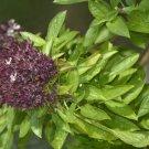 Ocimum ex Yemen, unique aroma 10 seeds - rare Basilicum