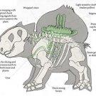 Vinteja charts of - Bulbasaur Anatomy - A3 Paper Print