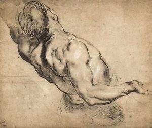 Study of man's torso by Rubens - 24x18 IN Canvas