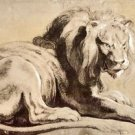Study of a Lion by Rubens - 24x32 IN Canvas