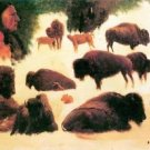Study of Buffaloes by Bierstadt - 24x18 IN Canvas