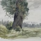 Tree in a Meadow - Poster Print (24 X 18 Inch)