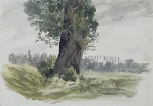 Tree in a Meadow - 24x18 IN Canvas