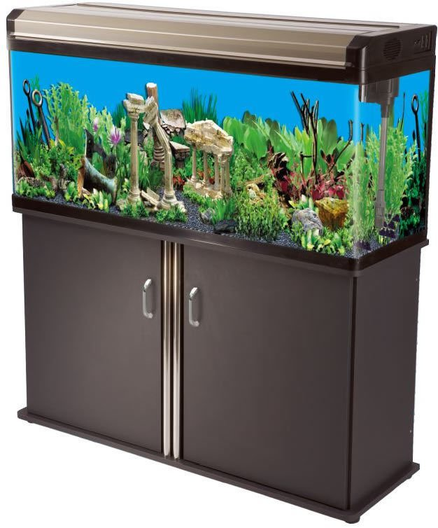 65 gallon aquarium reef fish tank