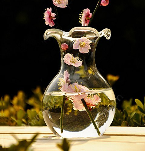 Delicate Decorative Clear Glass Scalloped Lipped Flower Vase for Home or Office