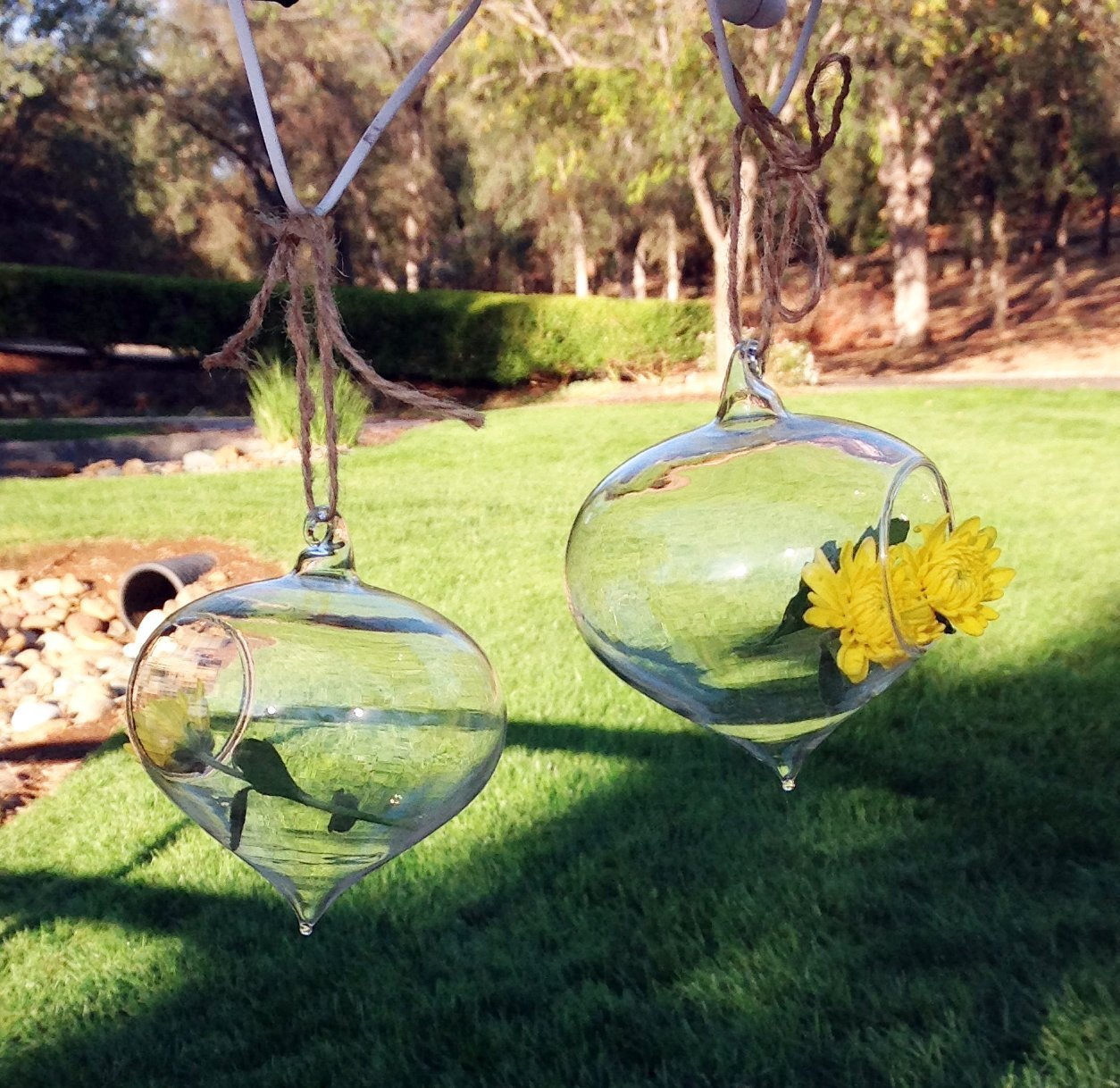 Set of 2 Delicate Turnip Shaped Glass Globes for Hydroculture or Fresh Cut Flowers