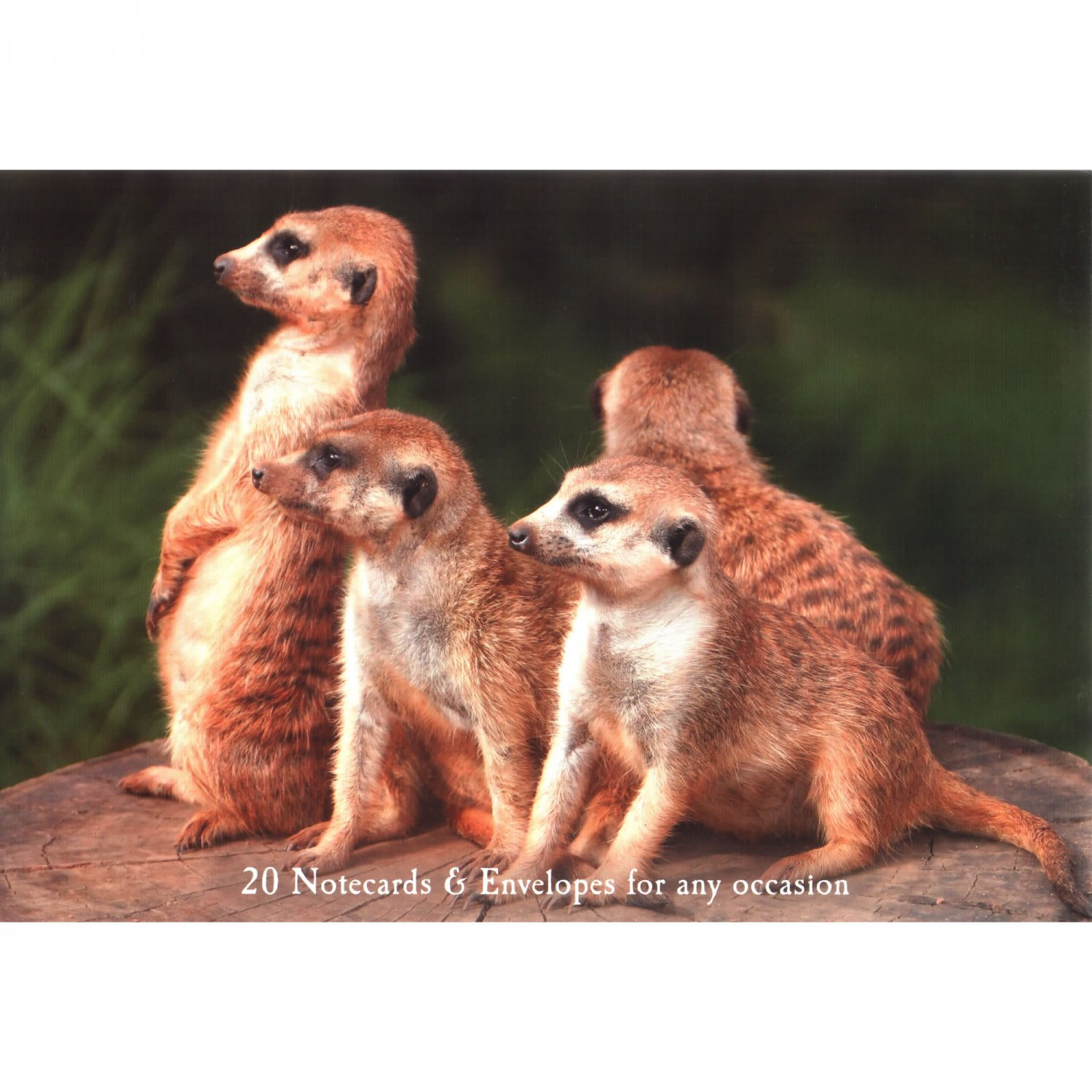 Meerkats - Set of 20 Notecards and Envelopes with Photos of Meerkats