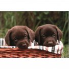 Dogs and Puppies Notecards and Envelopes Set of 20