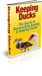 Keeping Ducks - The Secret to Successfully Raising & Keeping Ducks - Ebook
