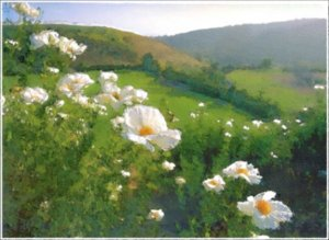 Matilija Poppies - Box of 8 Greeting Cards (5 inch by 7 inch) come with 8 envelopes (blank inside)