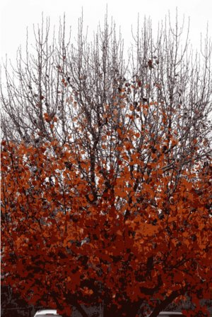 Fall in Arkansas - photograph greeting cards - box of 8