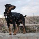 "On Sale: (S/M) Warm Dog Winter Jacket w/ Fleece Lining, 13-3/4"", Soft-Shell Special Edition, Black"