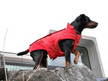 "On Sale: (XS) Warm Dog Winter Coat w/ Fleece Lining, 10"", Soft-Shell Special Edition, Red"