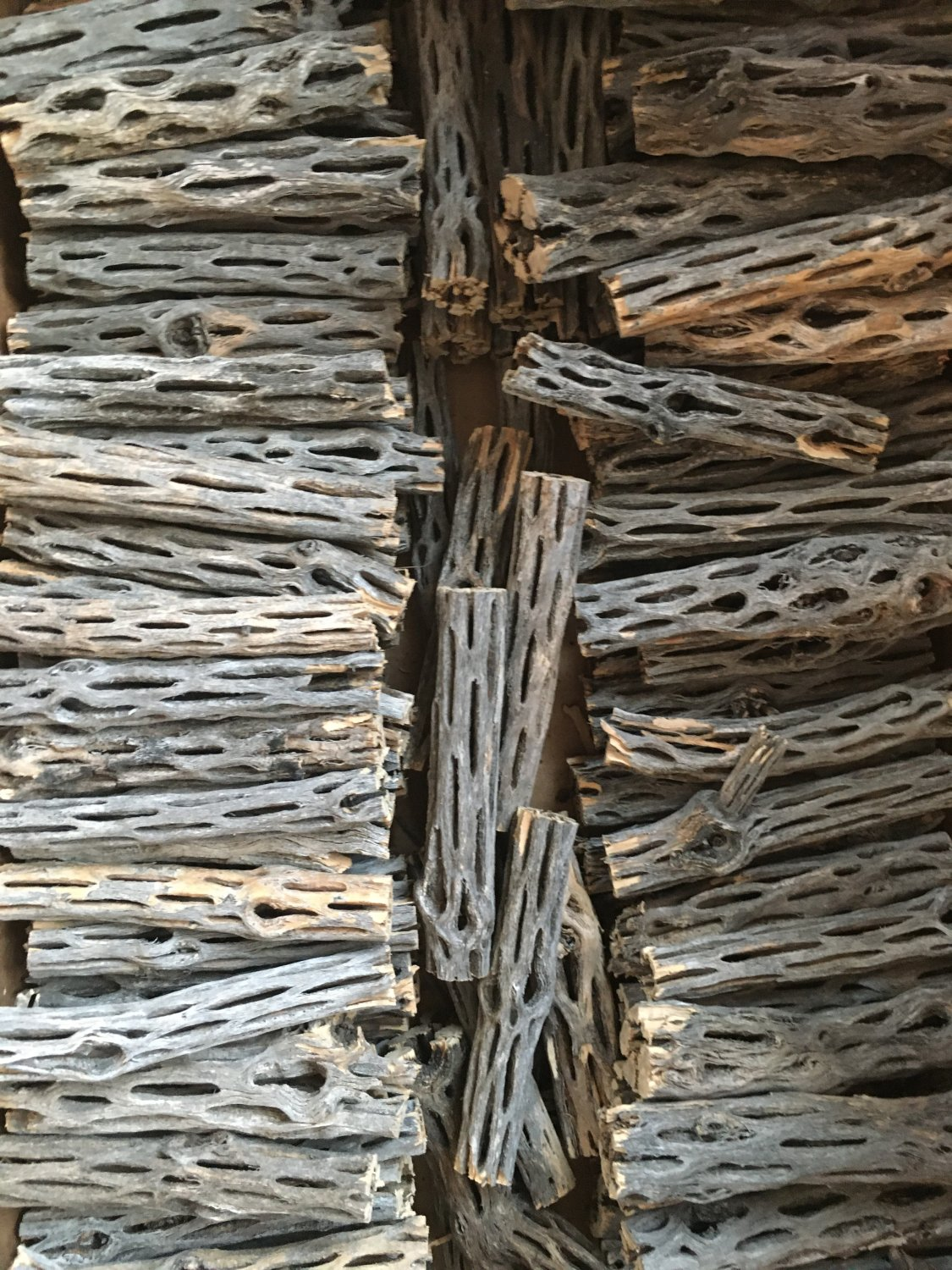 500 Pieces of 4 inch CHOLLA WOOD Wholesale Bulk