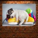 Cute Puppy Sleeping Poster 36x24 inch