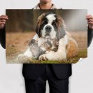 Saint Bernard Love For Kittens Poster 36x24 inch