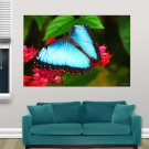 Blue Butterfly  Art Poster Print  36x24 inch