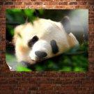 Pandas 8  Art Poster Print  32x24 inch