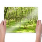 Spring Green Forest  Art Poster Print  24x18 inch