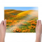 California Poppies And Rolling Hills  Art Poster Print  24x18 inch
