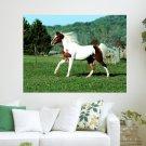 Paint Horse  Art Poster Print  24x18 inch