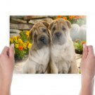 Twin Dogs  Art Poster Print  24x18 inch