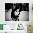 Wolf In The Snow  Art Poster Print  24x18 inch